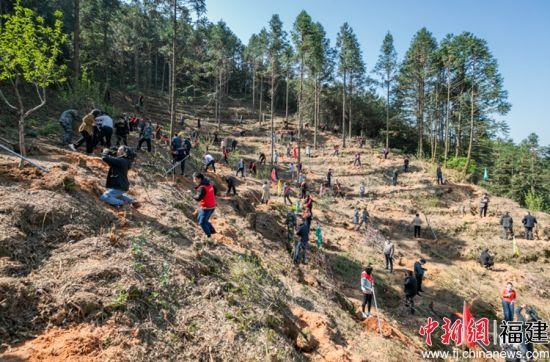3月25日,中共光泽县委、光泽县人民政府组织大型植树活动。
