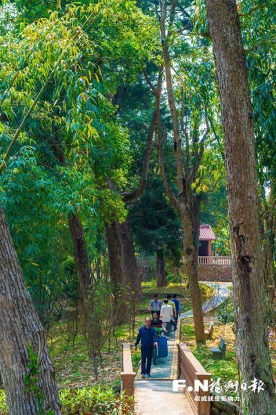 坵演村油杉林。记者 叶义斌 摄