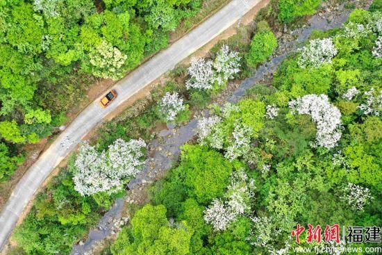 图为:国网明溪县供电公司夏坊供电所员工在绿水青山中巡线。唐伟 摄