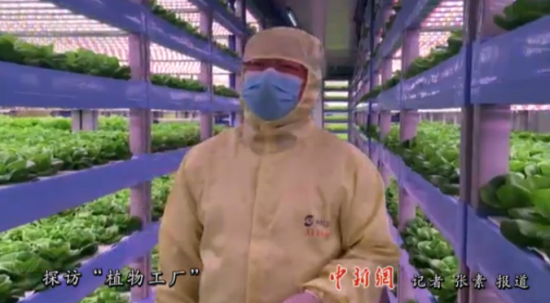 """探访""""植物工厂"""" 科学家说他们在""""耕种阳光"""""""
