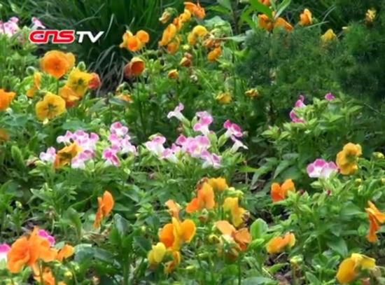 福建省首个花境迎来盛花期 市民游客享芬芳五月天