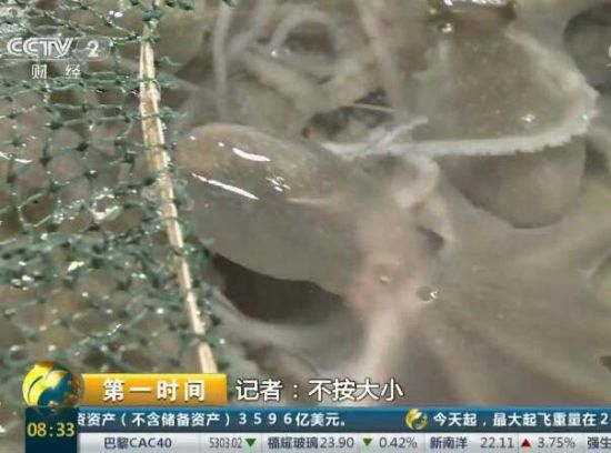 宁德霞浦:滩涂海鲜 做法简单味道美
