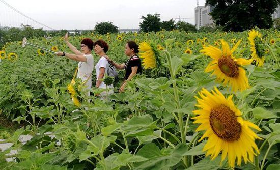 """福州花海公园有""""新花样"""""""