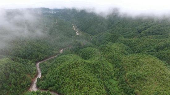 福建:林改促进生态文明建设