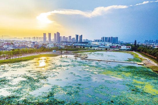漳州:打造城市醉美花海 助推全域旅游发展