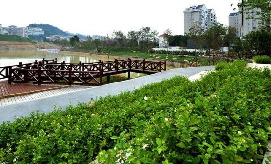 澳门真人博彩娱乐官网井店湖公园绿化基本完工 湖内将投放碳素纤维生态草