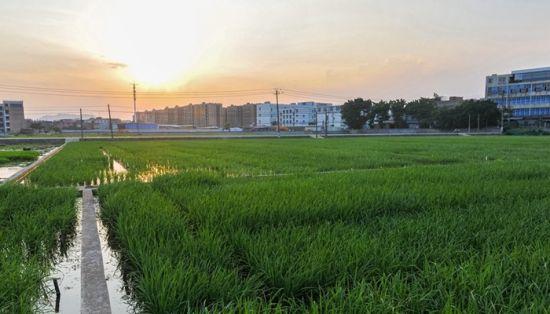 澳门真人博彩娱乐官网城市周边划定6.61万亩永久基本农田 促绿色发展