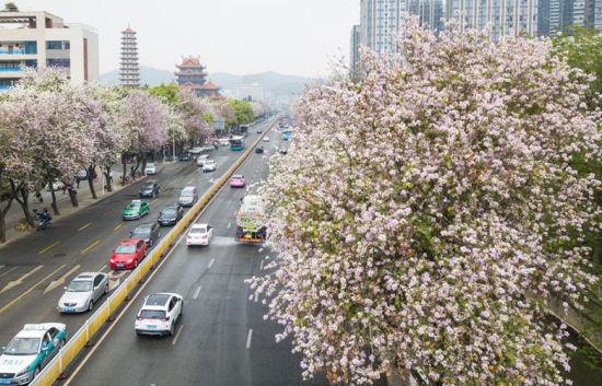 福州:人间四月花满城