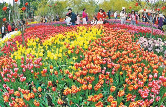 厦门:公园花海春意盎然